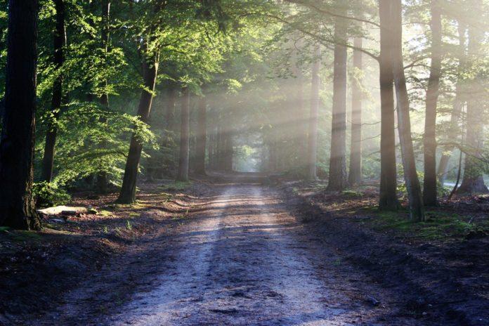 W poniedziałek pójdziemy do lasu? 2