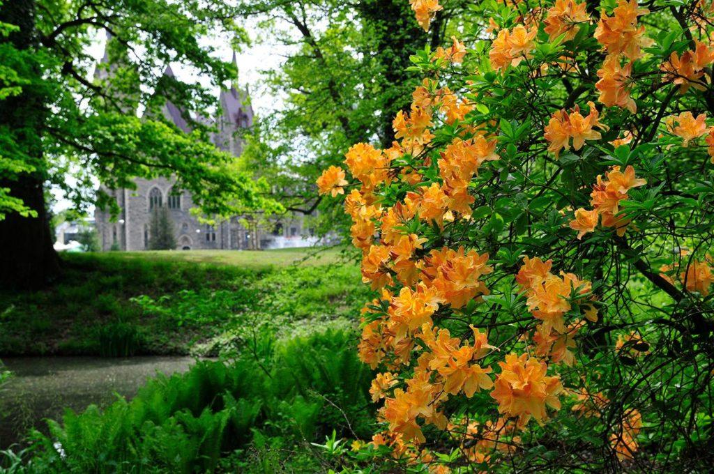 Zamek Moszna. 365 pomieszczeń, 99 wież i imponujący park kwitnący azaliami 13