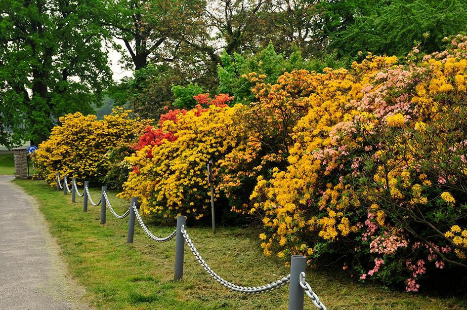 Zamek Moszna. 365 pomieszczeń, 99 wież i imponujący park kwitnący azaliami 14