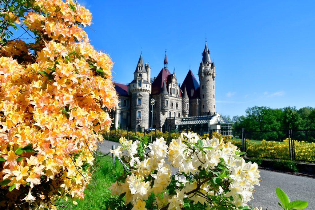 Zamek Moszna. 365 pomieszczeń, 99 wież i imponujący park kwitnący azaliami 3
