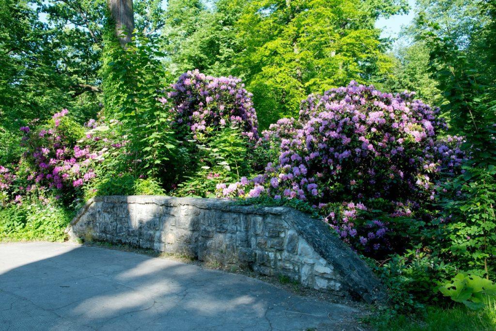 Zamek Moszna. 365 pomieszczeń, 99 wież i imponujący park kwitnący azaliami 15