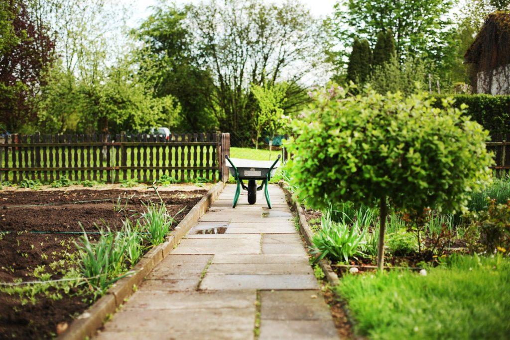 Porady dla działkowców i nie tylko — Nieproszeni goście w naszym domu i ogrodzie 1