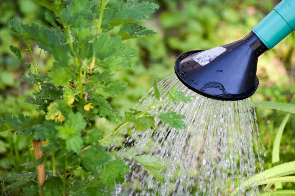 Radni apelują — oszczędzajmy wodę 1