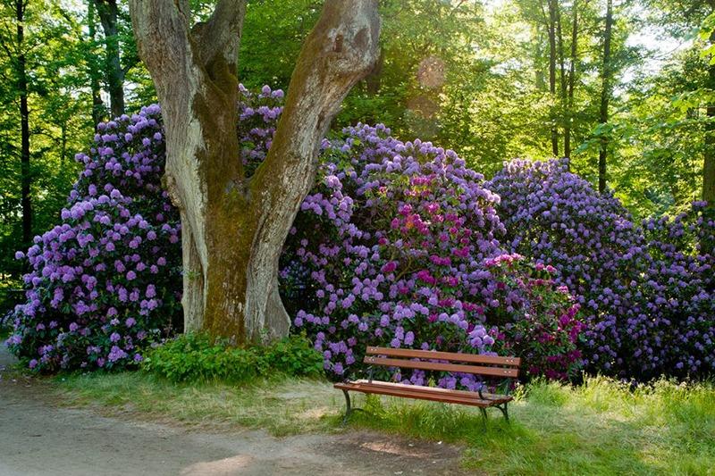 Zamek Moszna. 365 pomieszczeń, 99 wież i imponujący park kwitnący azaliami 17