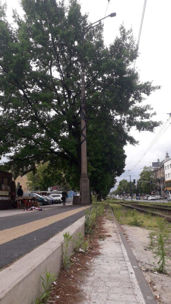 MPK zapewnia, że drzewa przy torowisku w Śródmieściu pozostaną 1