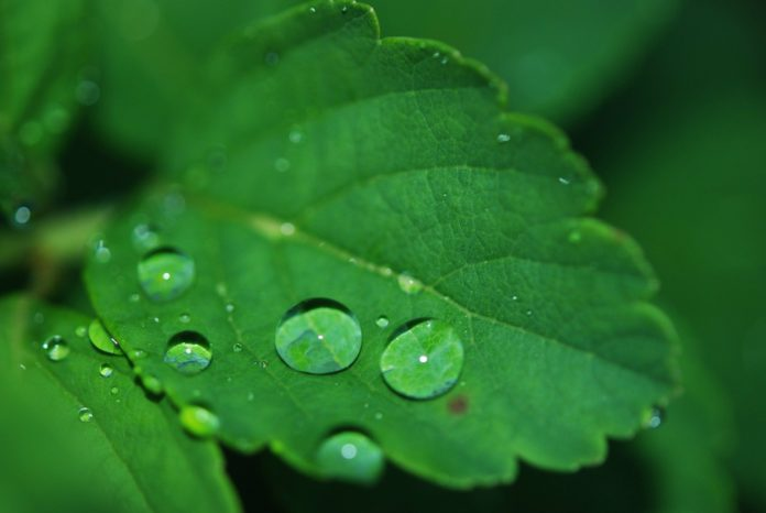 Radni mają pomysł na suszę – zbierajmy deszczówkę 2