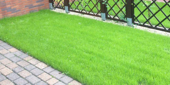 Idealny trawnik - porady eksperta 2