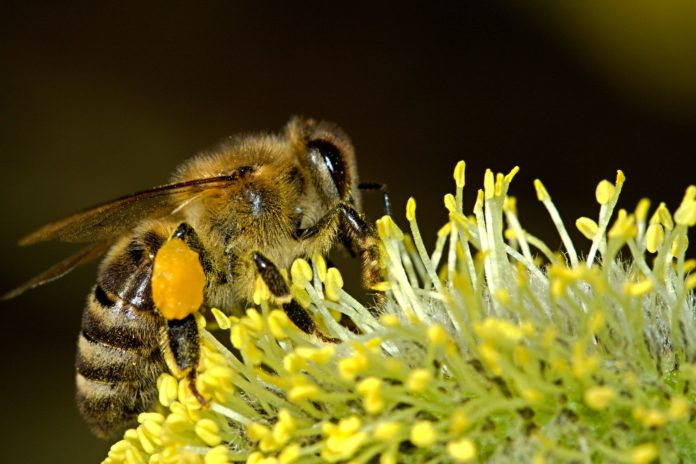 Pszczoły to serce ekosystemu, dlatego należy o nie dbać 2