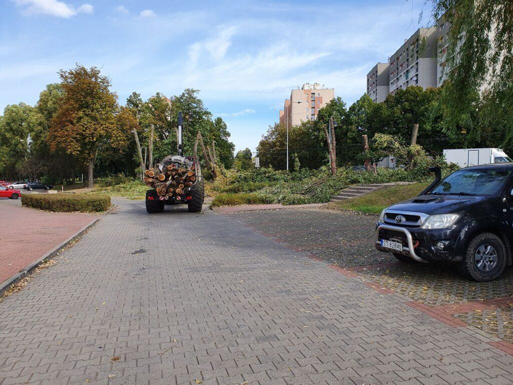Przy al. Niepodległości w Częstochowie wycinają zdrowe drzewa, alarmuje radny Piotr Kaliszewski 4