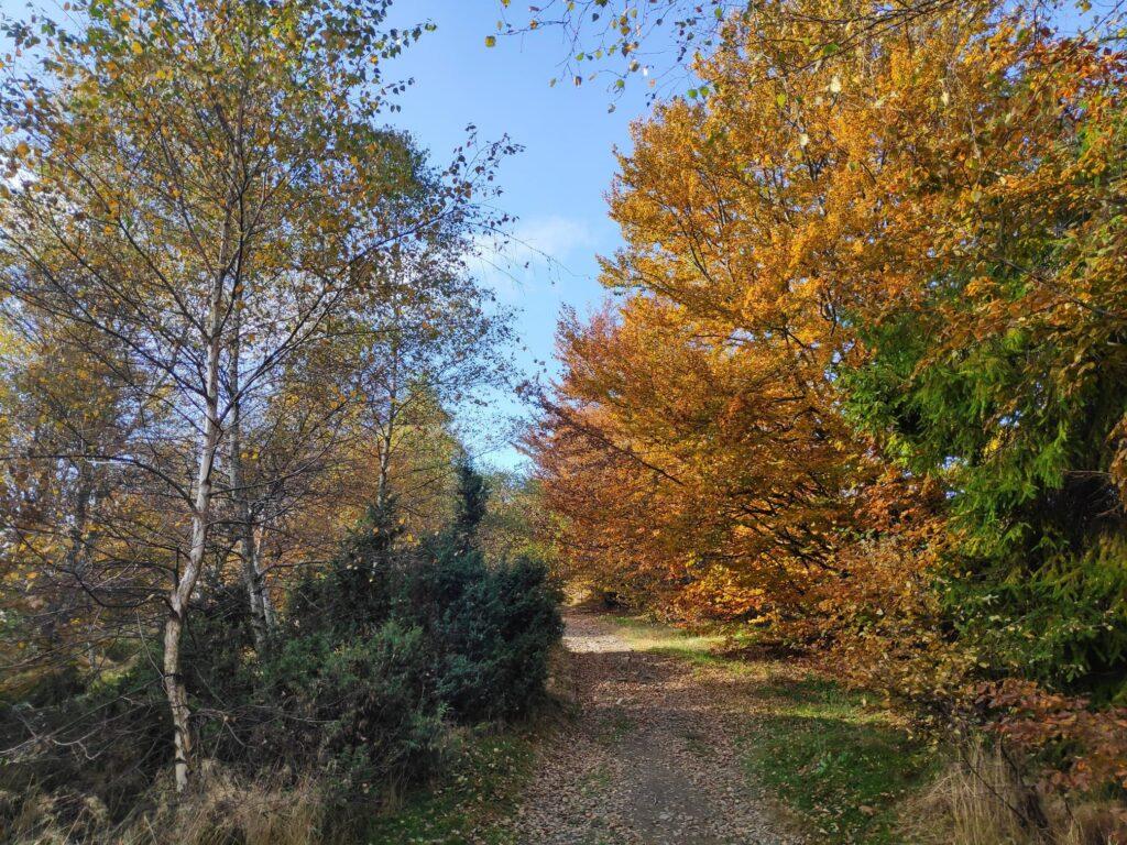 Jesienna Góra Żar , widokowa trasa dla amatorów spacerów 9
