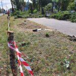 Przy al. Niepodległości w Częstochowie wycinają zdrowe drzewa, alarmuje radny Piotr Kaliszewski 1