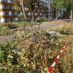 Przy al. Niepodległości w Częstochowie wycinają zdrowe drzewa, alarmuje radny Piotr Kaliszewski 2