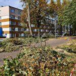Przy al. Niepodległości w Częstochowie wycinają zdrowe drzewa, alarmuje radny Piotr Kaliszewski 3