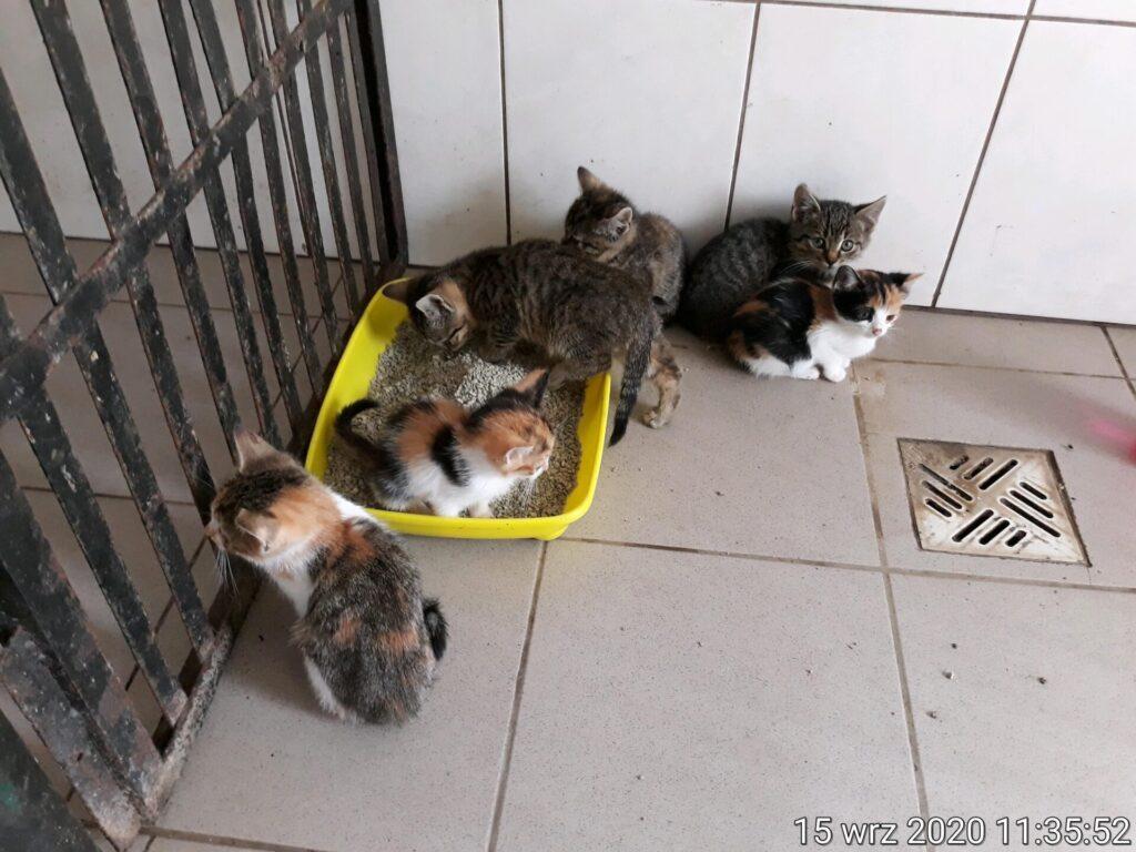 Prosimy dla nich o dobry dom – apeluje Stowarzyszenie Częstochowa dla Zwierząt 3