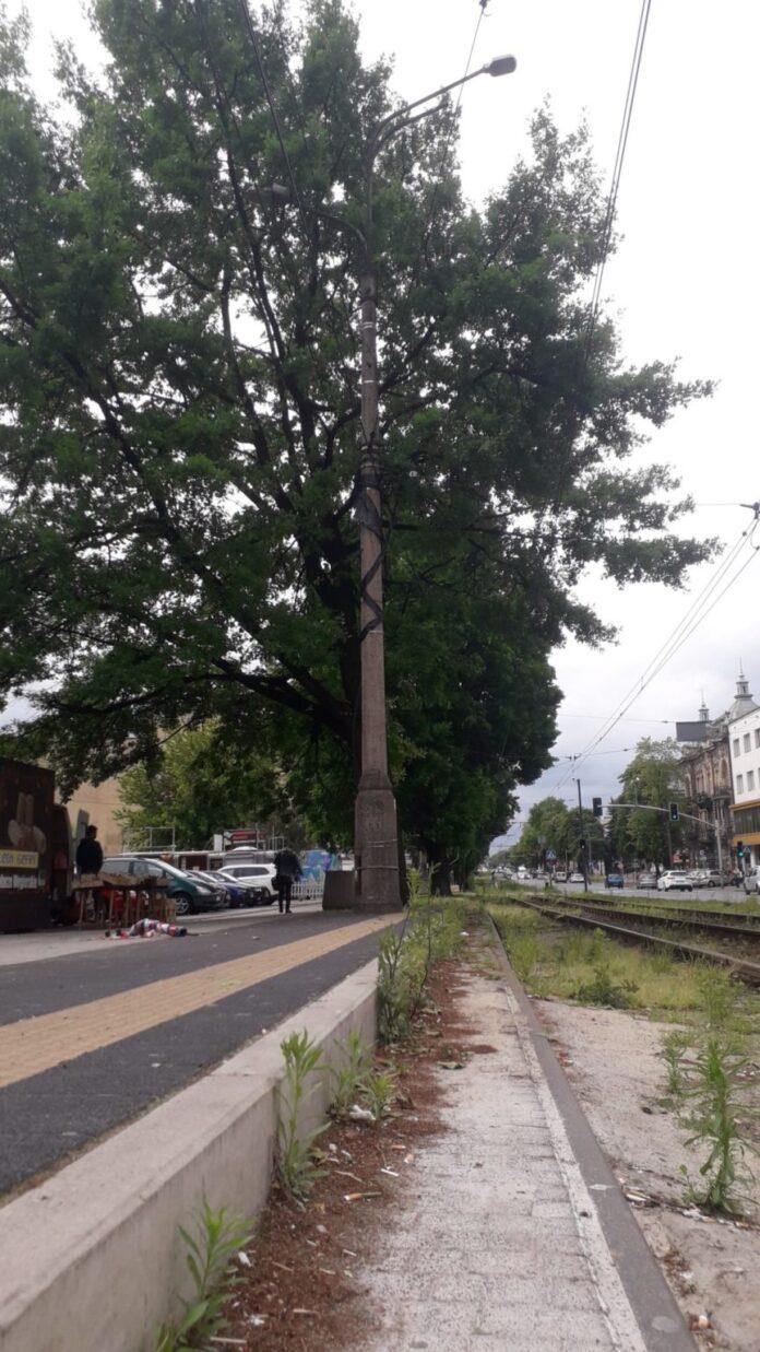 Częstochowskie MZDiT zapewnia, że dba o drzewa i wylicza, ile robi dla miejskiej zieleni 2