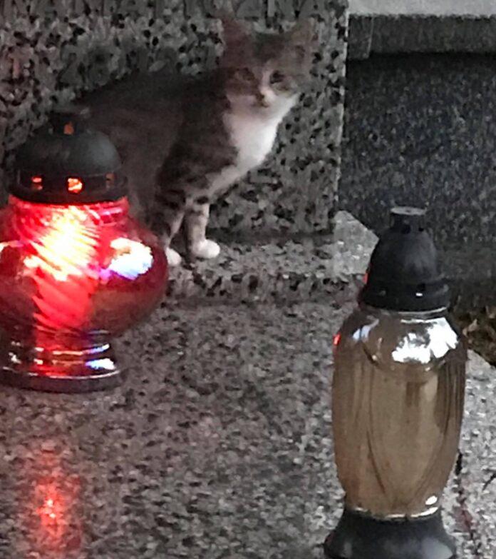 Członkowie częstochowskiej grupy społeczników zajmującej się bezdomnymi zwierzętami szukają osoby, która w bestialski sposób zabiła wolno żyjące koty 3