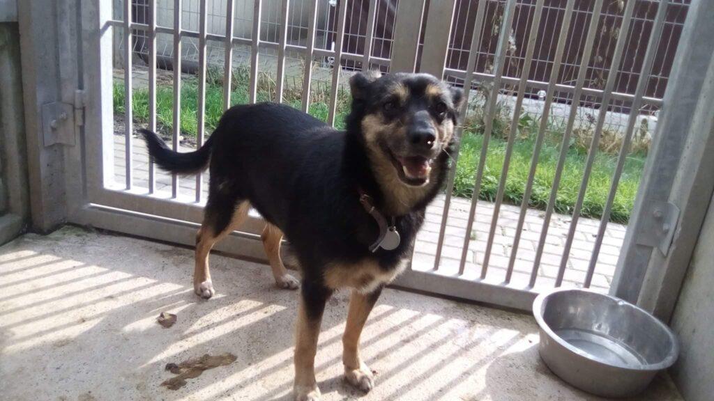 Zwierzaki do adopcji – Stowarzyszenie Częstochowa dla Zwierząt prosi o pomoc 4