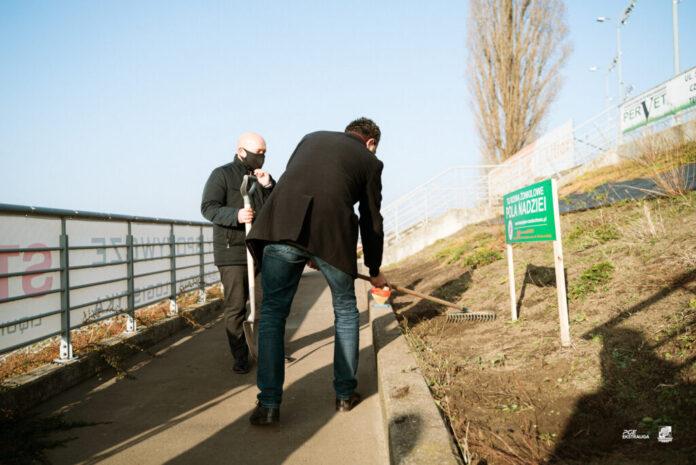 Na stadionie Włókniarza czyli Arenie zielona-energia.com posadzono żonkile i stworzono Pole Nadziei 2
