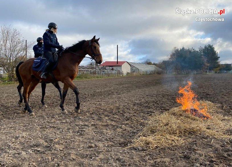 Gladioso zdał egzamin i będzie pełnił służbę w częstochowskiej policji konnej 1
