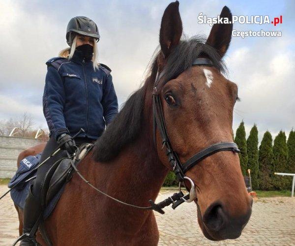 Gladioso zdał egzamin i będzie pełnił służbę w częstochowskiej policji konnej 4