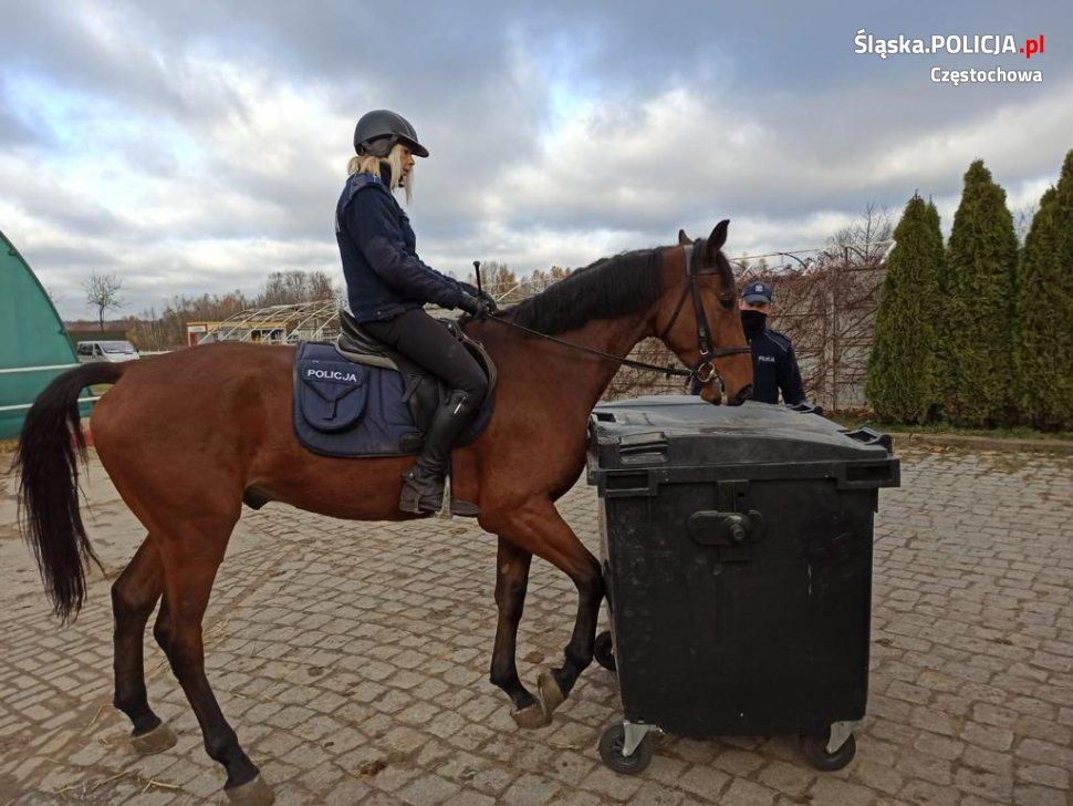 Gladioso zdał egzamin i będzie pełnił służbę w częstochowskiej policji konnej 2