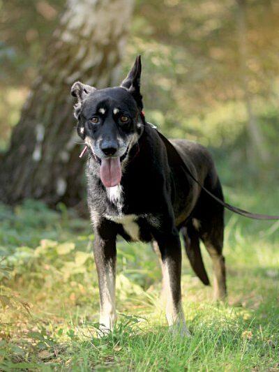 Razem poszukajmy domów dla tych cudownych zwierzaków, które znajdują się w Schronisku dla Bezdomnych Zwierząt w Częstochowie 3