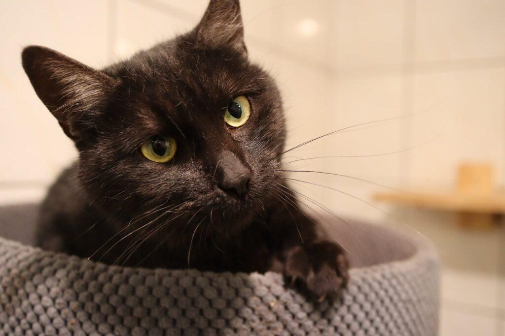 Razem poszukajmy domów dla tych cudownych zwierzaków, które znajdują się w Schronisku dla Bezdomnych Zwierząt w Częstochowie 7