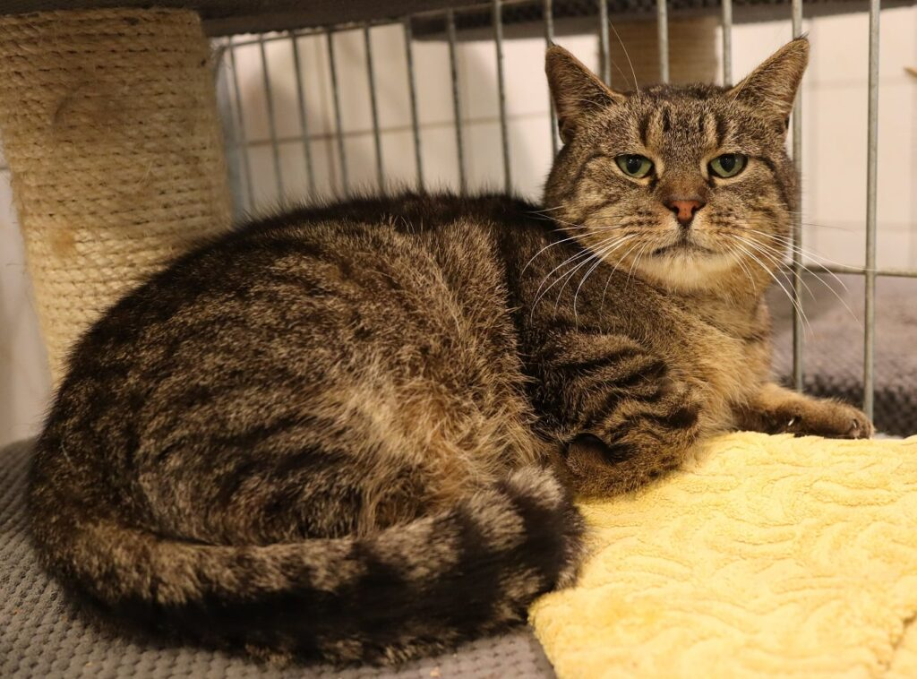 Razem poszukajmy domów dla tych cudownych zwierzaków, które znajdują się w Schronisku dla Bezdomnych Zwierząt w Częstochowie 6