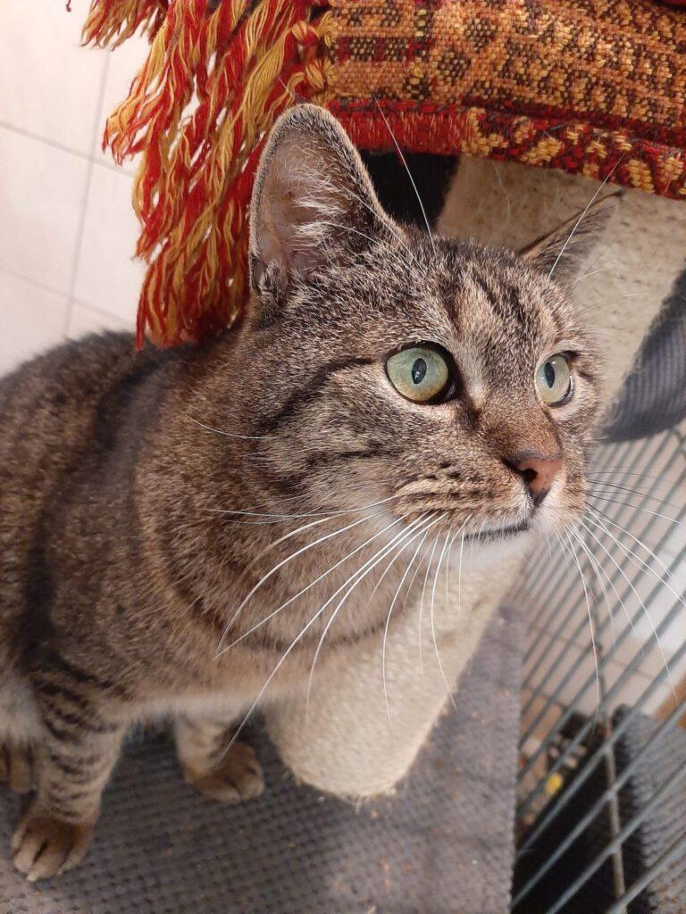 Razem poszukajmy domów dla tych cudownych zwierzaków, które znajdują się w Schronisku dla Bezdomnych Zwierząt w Częstochowie 5