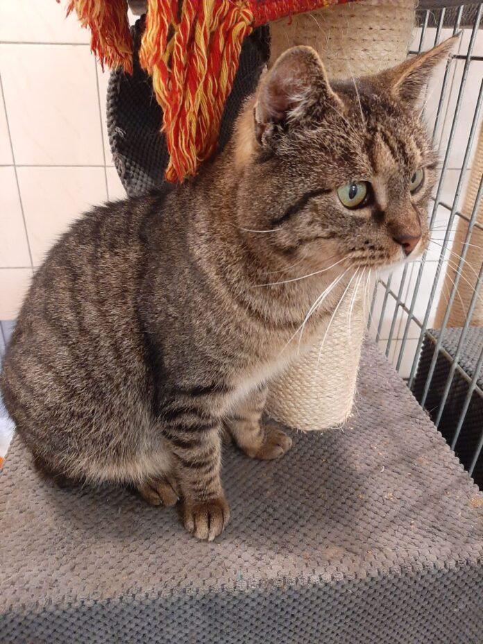 Razem poszukajmy domów dla tych cudownych zwierzaków, które znajdują się w Schronisku dla Bezdomnych Zwierząt w Częstochowie 10