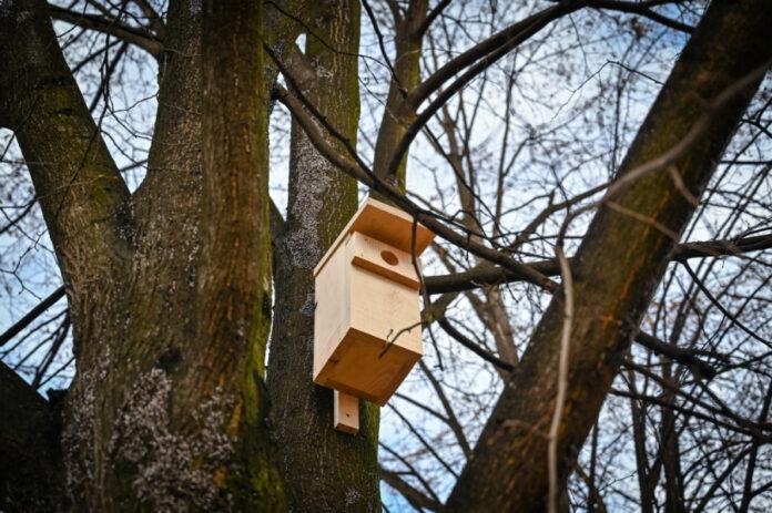 Jeże mają domki, dla ptaków w Częstochowie przygotowano specjalne budki 2