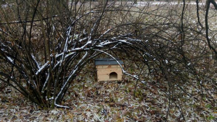 W Częstochowie jeże mają szansę przetrwać bezpiecznie zimę 3