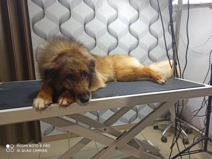 Adoptuj mnie. Razem ze Stowarzyszeniem Częstochowa dla Zwierząt oraz Schroniskiem dla Bezdomnych Zwierząt w Częstochowie szuka dobrych domów dla pokrzywdzonych przez los czworonogów 8