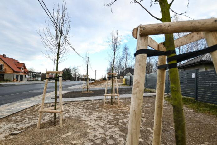 Ponad 90 drzew i 1300 krzewów posadzono pod koniec roku w częstochowskiej dzielnicy Północ 2