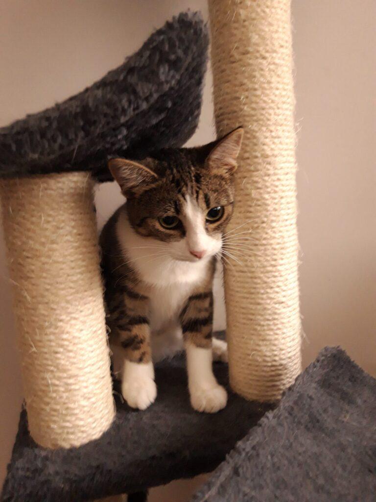 Adoptuj mnie. Razem ze Stowarzyszeniem Częstochowa dla Zwierząt oraz Schroniskiem dla Bezdomnych Zwierząt w Częstochowie szuka dobrych domów dla pokrzywdzonych przez los czworonogów 1