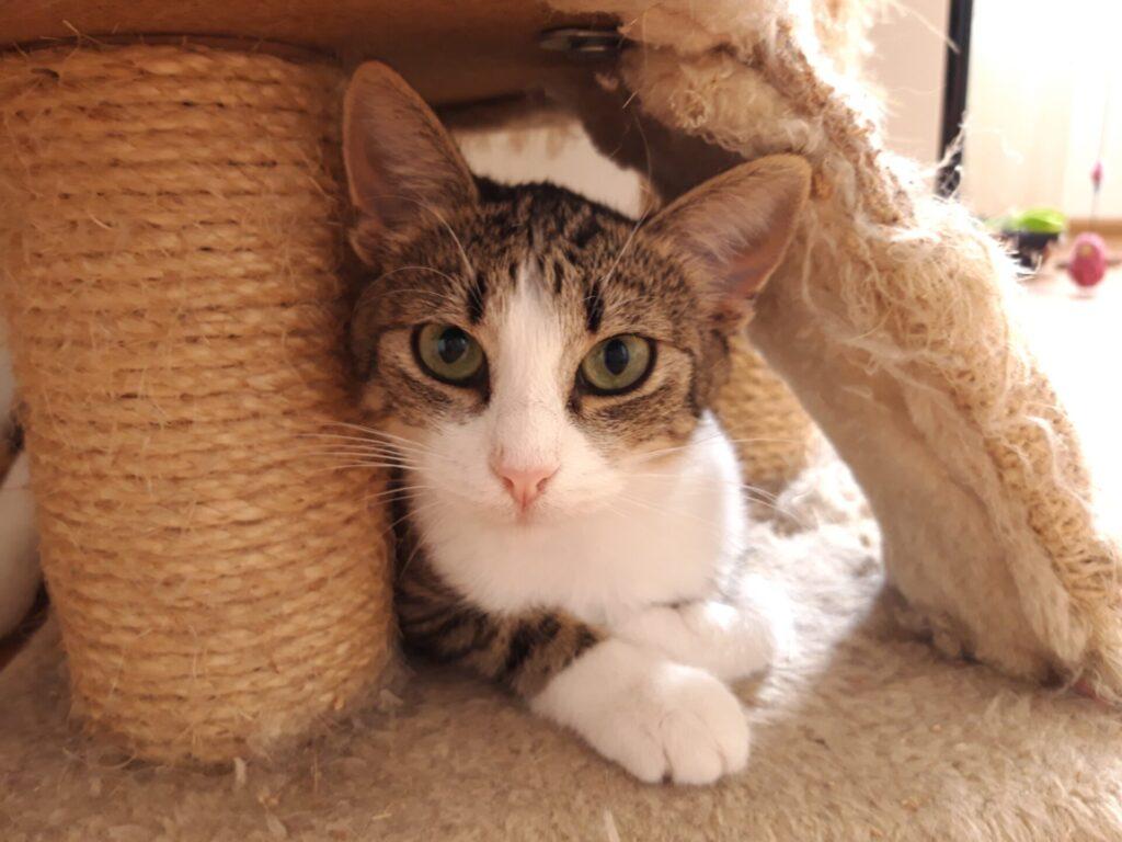 Adoptuj mnie. Razem ze Stowarzyszeniem Częstochowa dla Zwierząt oraz Schroniskiem dla Bezdomnych Zwierząt w Częstochowie szuka dobrych domów dla pokrzywdzonych przez los czworonogów 2
