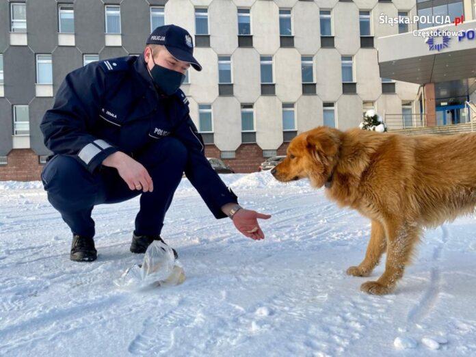 Pies przyszedł po pomoc do policjantów 2