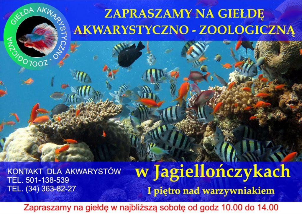 """Giełda akwarystyczno-zoologiczna w częstochowskich """"Jagiellończykach"""" 1"""