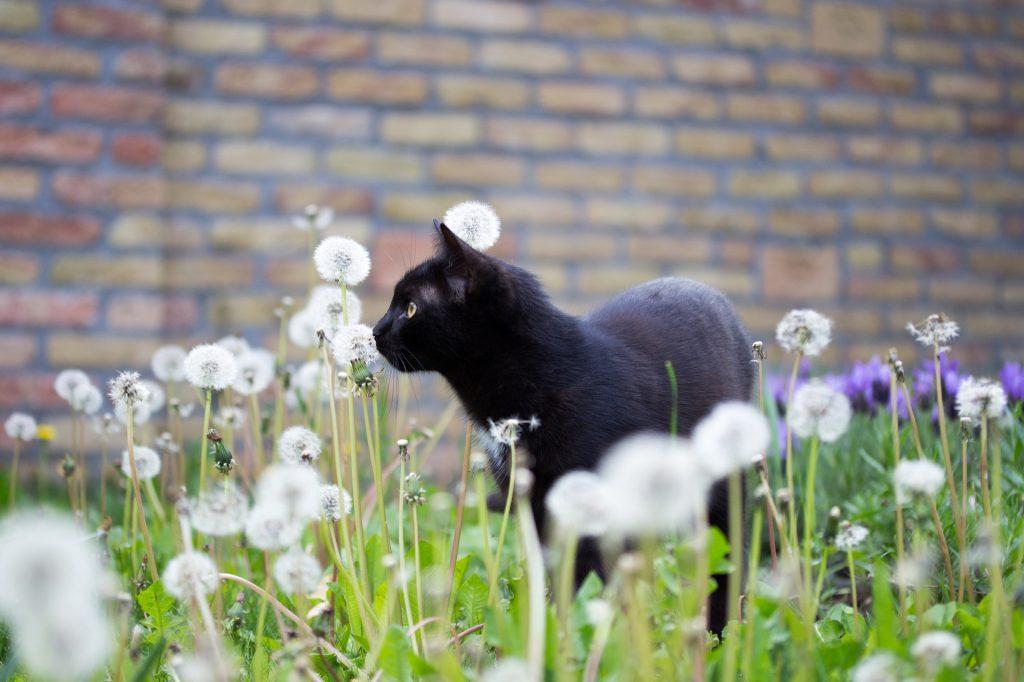 Czy w Częstochowie staną kotomaty na karmę dla zwierząt? Radna Małgorzata Iżyńska ma taki pomysł 1