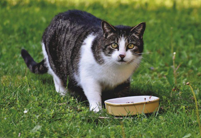 Czy w Częstochowie staną kotomaty na karmę dla zwierząt? Radna Małgorzata Iżyńska ma taki pomysł 3