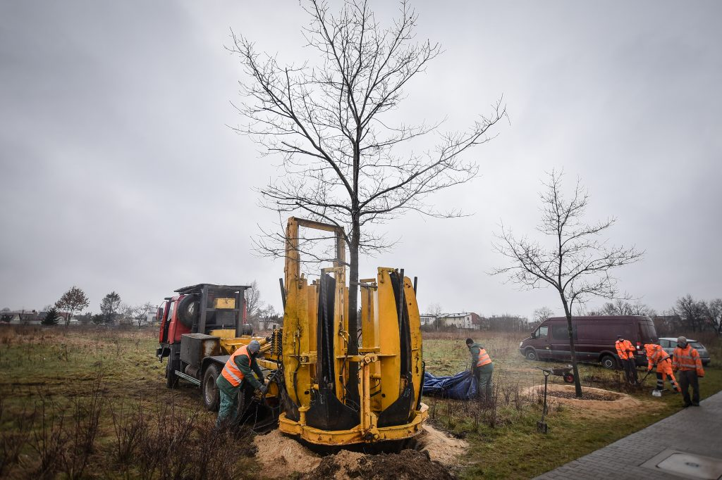 W Częstochowie drzewa ruszyły w drogę 7