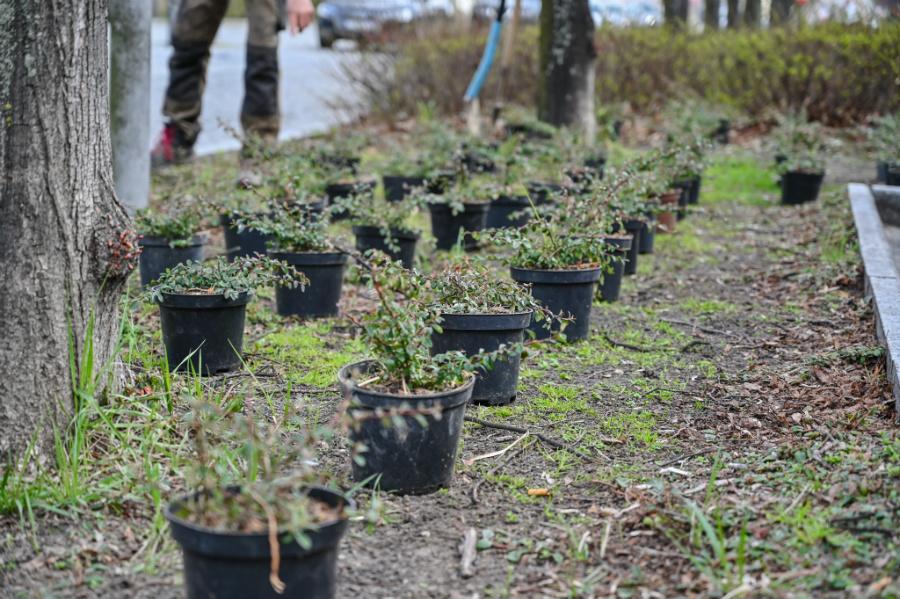 W Alejach uzupełniają zieleń po zimie. Rośliny sponsoruje firma, która współpracuje z miastem w ramach dofinansowanego przez Unię projektu 3