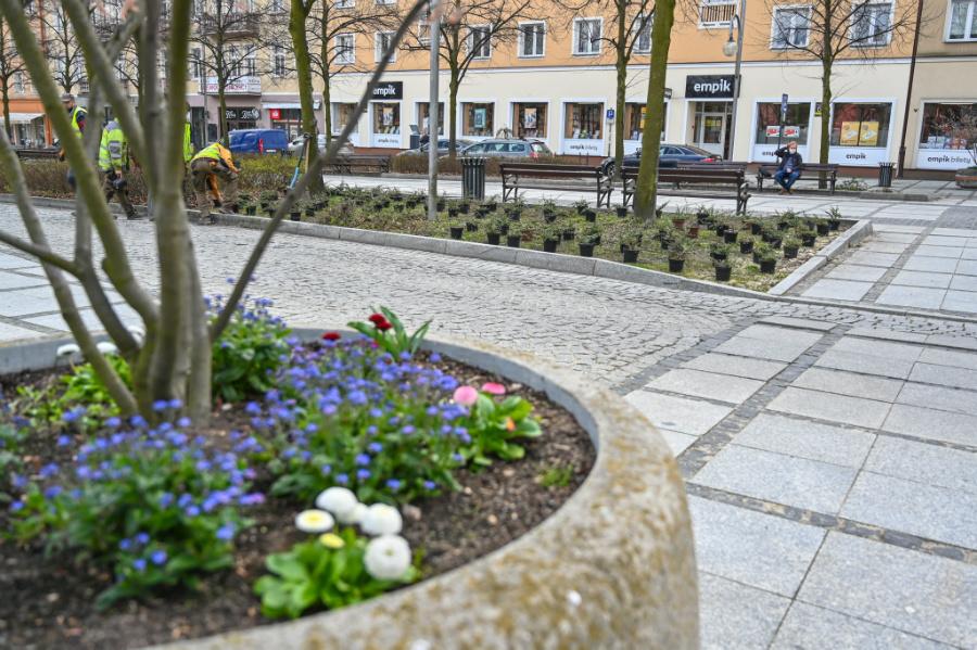 W Alejach uzupełniają zieleń po zimie. Rośliny sponsoruje firma, która współpracuje z miastem w ramach dofinansowanego przez Unię projektu 4