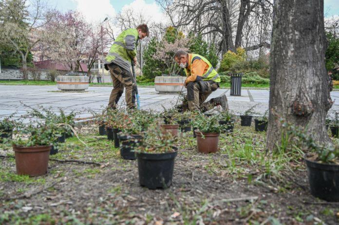 W Alejach uzupełniają zieleń po zimie. Rośliny sponsoruje firma, która współpracuje z miastem w ramach dofinansowanego przez Unię projektu 8
