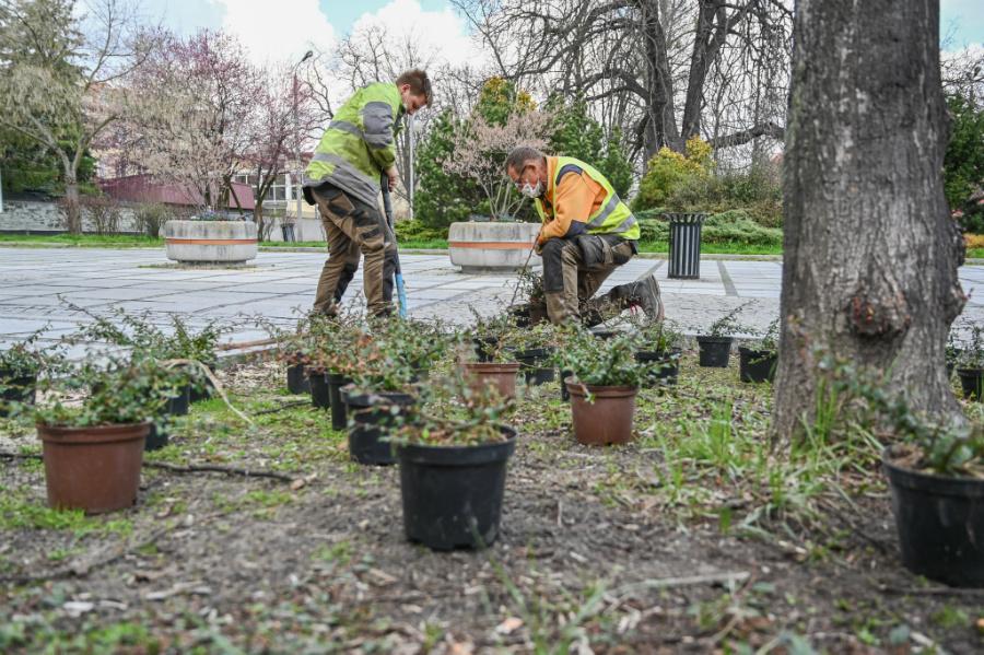 W Alejach uzupełniają zieleń po zimie. Rośliny sponsoruje firma, która współpracuje z miastem w ramach dofinansowanego przez Unię projektu 5