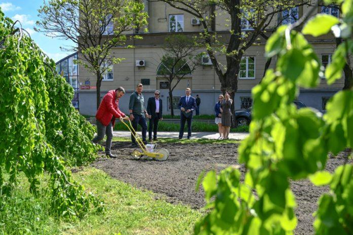 Na skwerze Solidarności w Częstochowie zakwitną słoneczniki 5