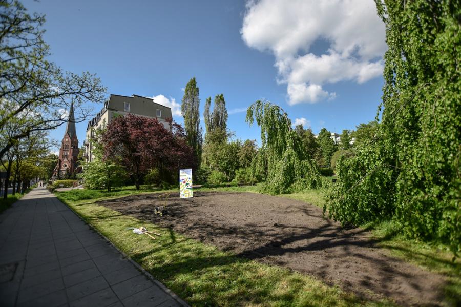 Na skwerze Solidarności w Częstochowie zakwitną słoneczniki 2