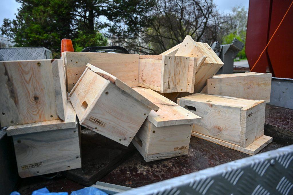Częstochowa walczy z komarami budując domki dla jerzyków 5