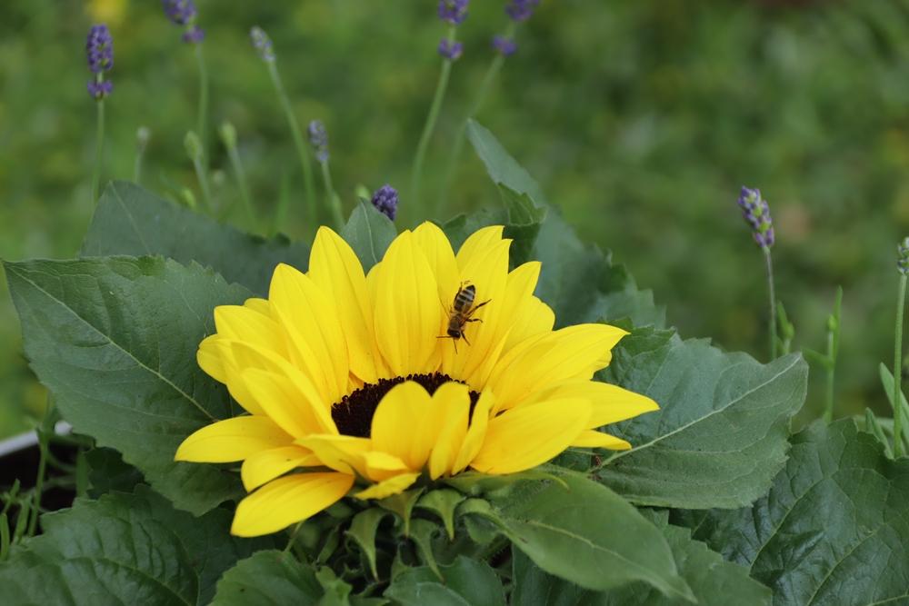 W częstochowskiej dzielnicy Dźbów powstała miejska pasieka. Pszczoły już pracują, wkrótce więc można spodziewać się miodu 3