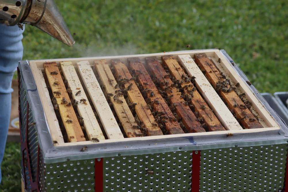 W częstochowskiej dzielnicy Dźbów powstała miejska pasieka. Pszczoły już pracują, wkrótce więc można spodziewać się miodu 8